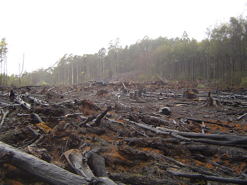 What is deforestation and how can I help prevent it?