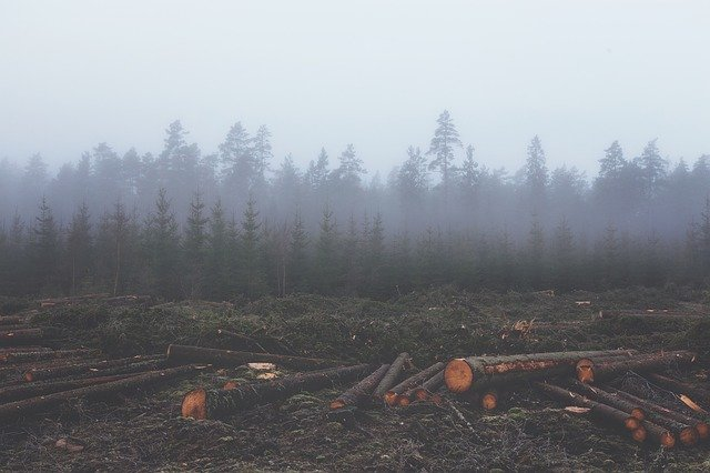 How is deforestation affecting climate change?
