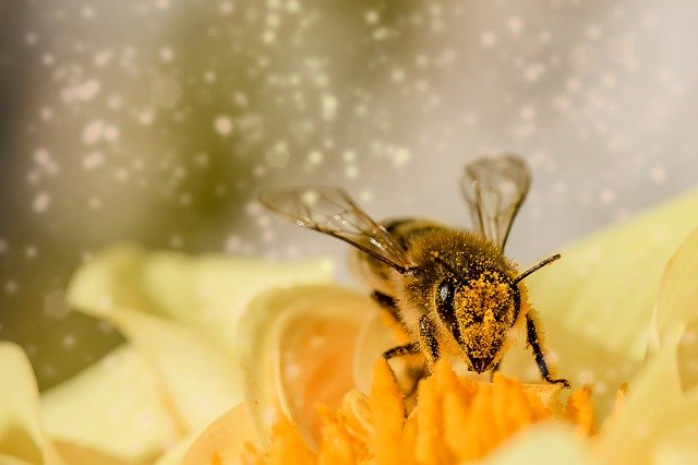 Why do we need to help bees?